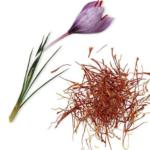 Шафран (Crocus sativus) Пряности и приправы