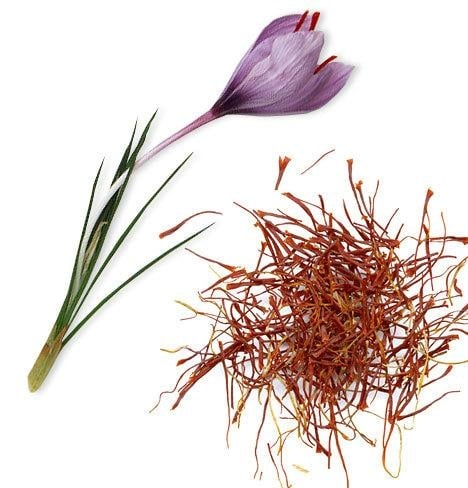 Шафран (Crocus sativus)