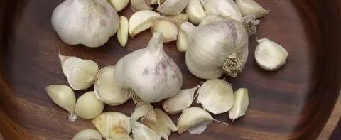 Чеснок (Allium sativum) Пряности и приправы