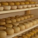 Как делать сыр Заготовки, консервирование