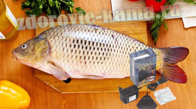 Обезвреживание рыбы Заготовки, консервирование