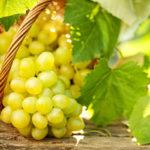 Смоква из винограда Заготовки, консервирование