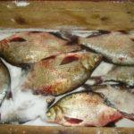 Соление рыбы Рыбацкая кухня