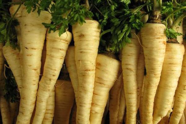Засолка сельдерея, моркови и корней петрушки