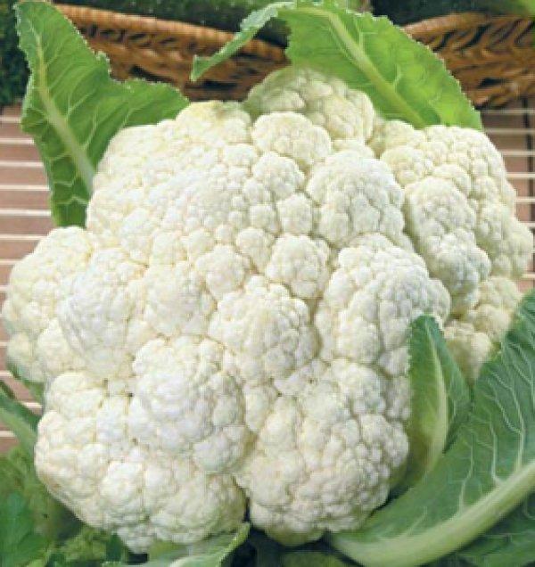 Выращивание цветной капусты, сорта цветной капусты