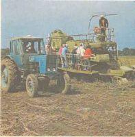 Выращивание томатов в теплице Польза продуктов Пряности и приправы
