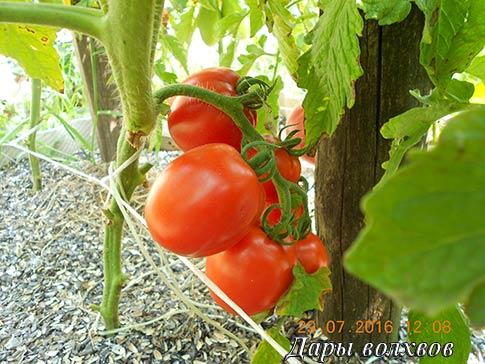 Сон томатный с перцем и луком