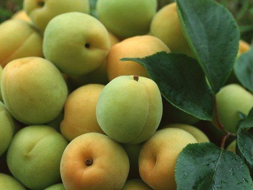 Варенье из зеленых абрикосов